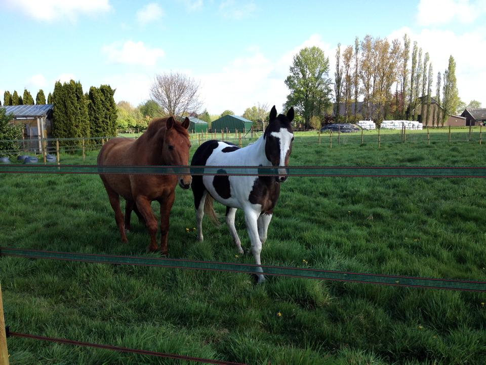 paard aan huis 2