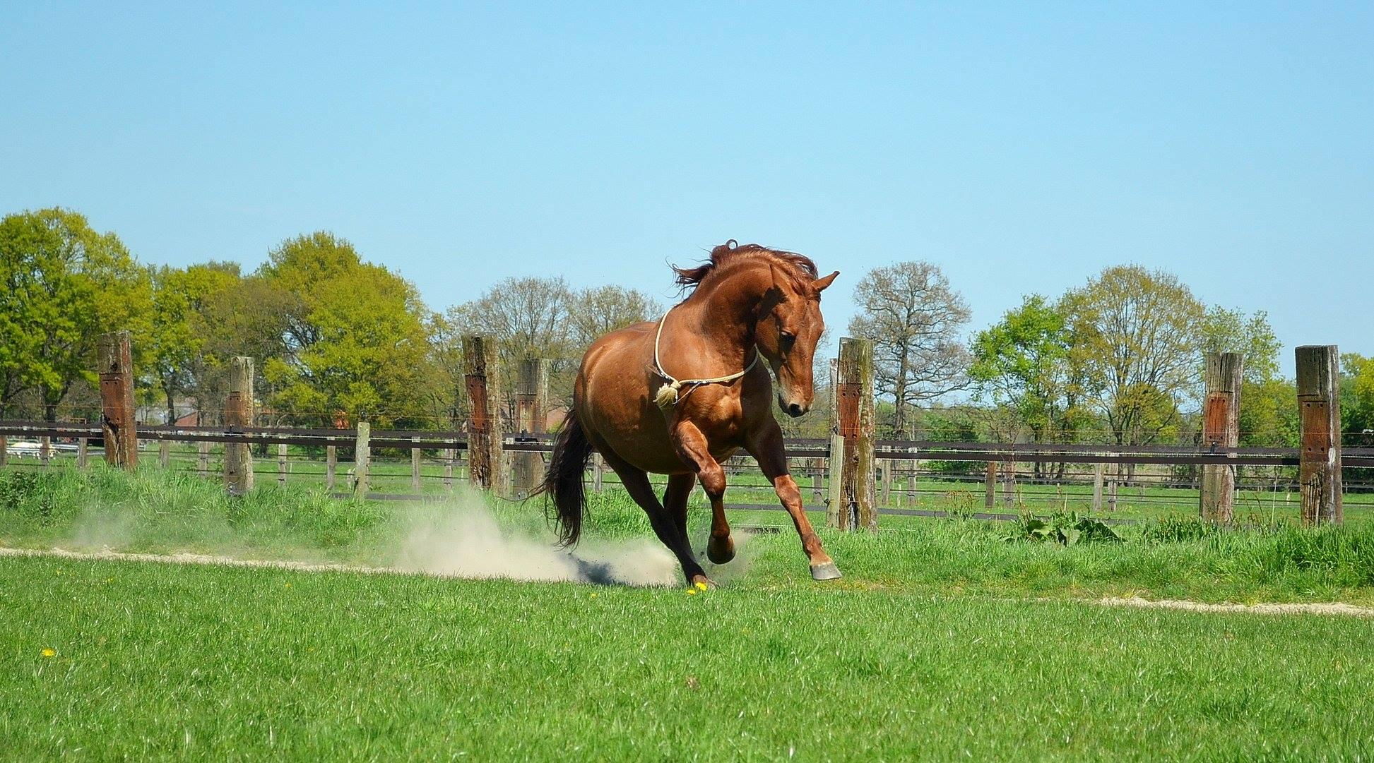 Energiek paard dankzij magnesium
